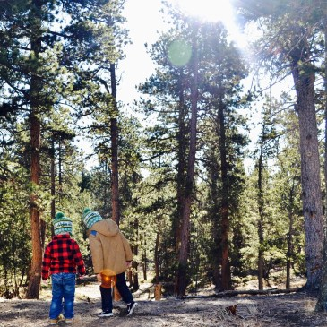 Two young boys holding hands in the forest searching for a Christmas tree with the sunlight coming down.