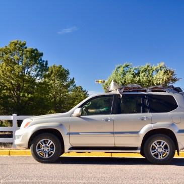 An SUV with a green Christmas tree strapped to the top of the car in a parking lot with a fence behind us.