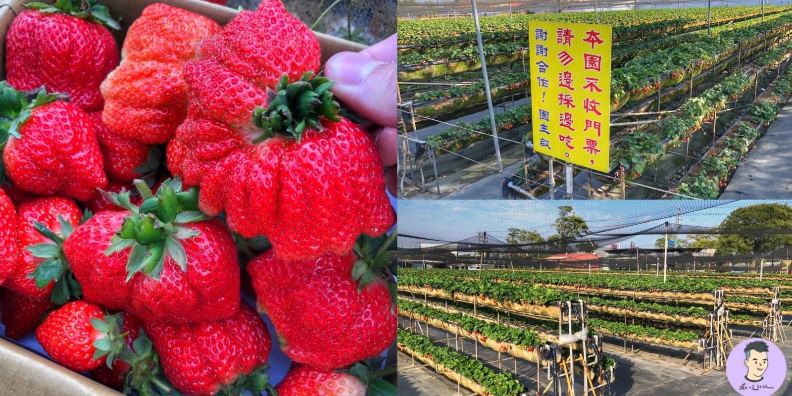 【2021台南善化草莓季】限時1個月!!! 這四家採草莓8折優惠 滿五百送好禮+刮刮卡 打卡再送草莓造型燈籠