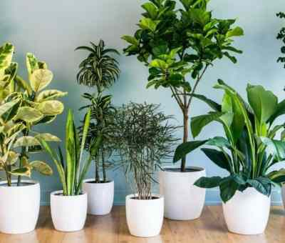 plants inside your home