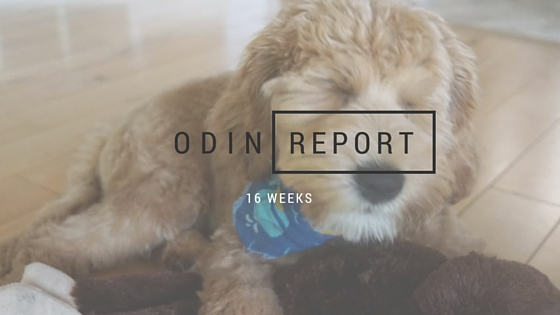 Odin 16 wks