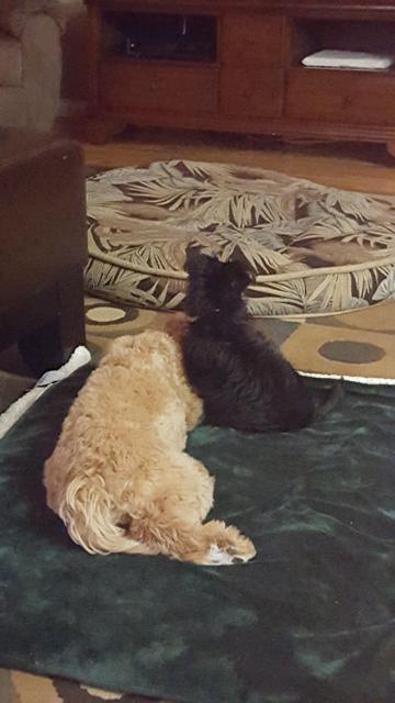 Penny & Odin