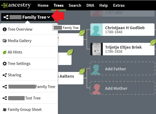 This image shows you exactly where to click to access your family tree settings on Ancestry from the family or pedigree view.