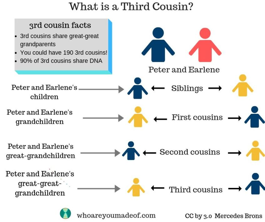 What is a third cousin?  This image is a visual example of third cousins.