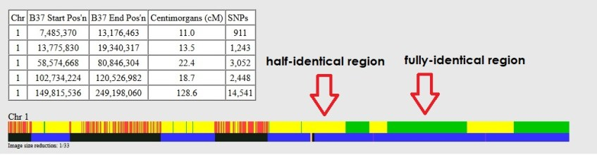 example of fully-identical and half-identical regions on gedmatch one to one tool