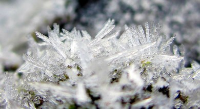 and this patch of moss, an icy coating ..