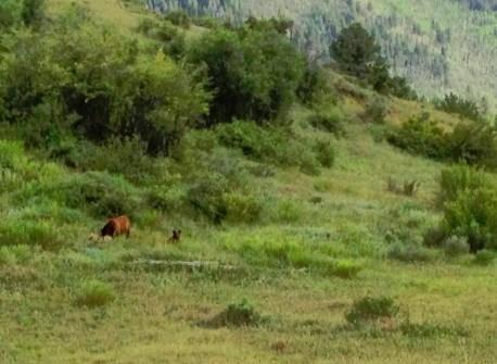 bear-and-cub