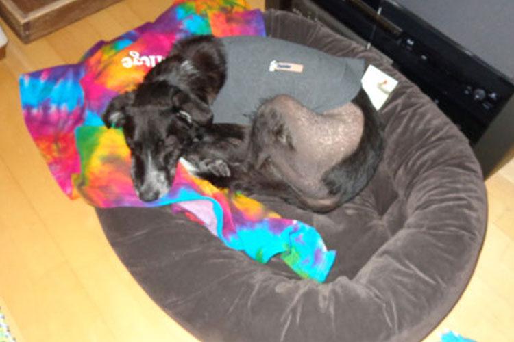 Toronto Humane Society - Who Is NOBODY?