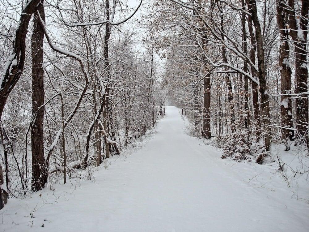 snowy road woods