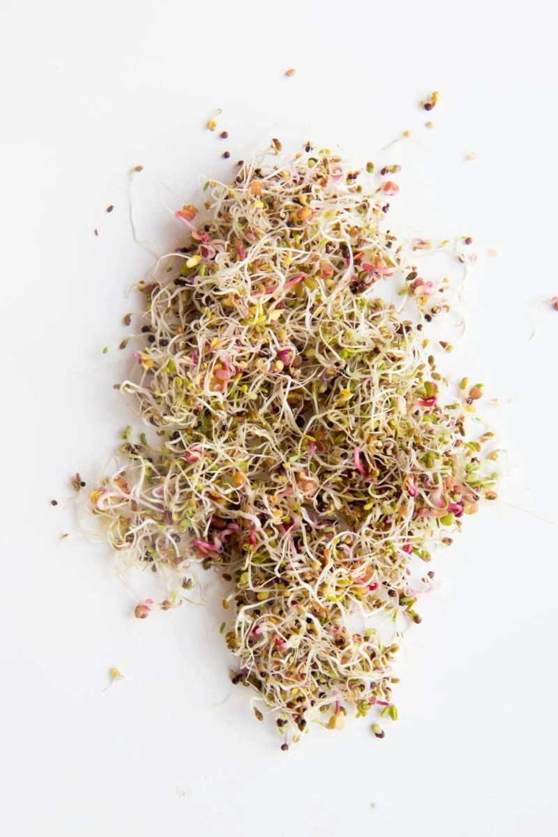 Mix of various types of sprouts on a white background