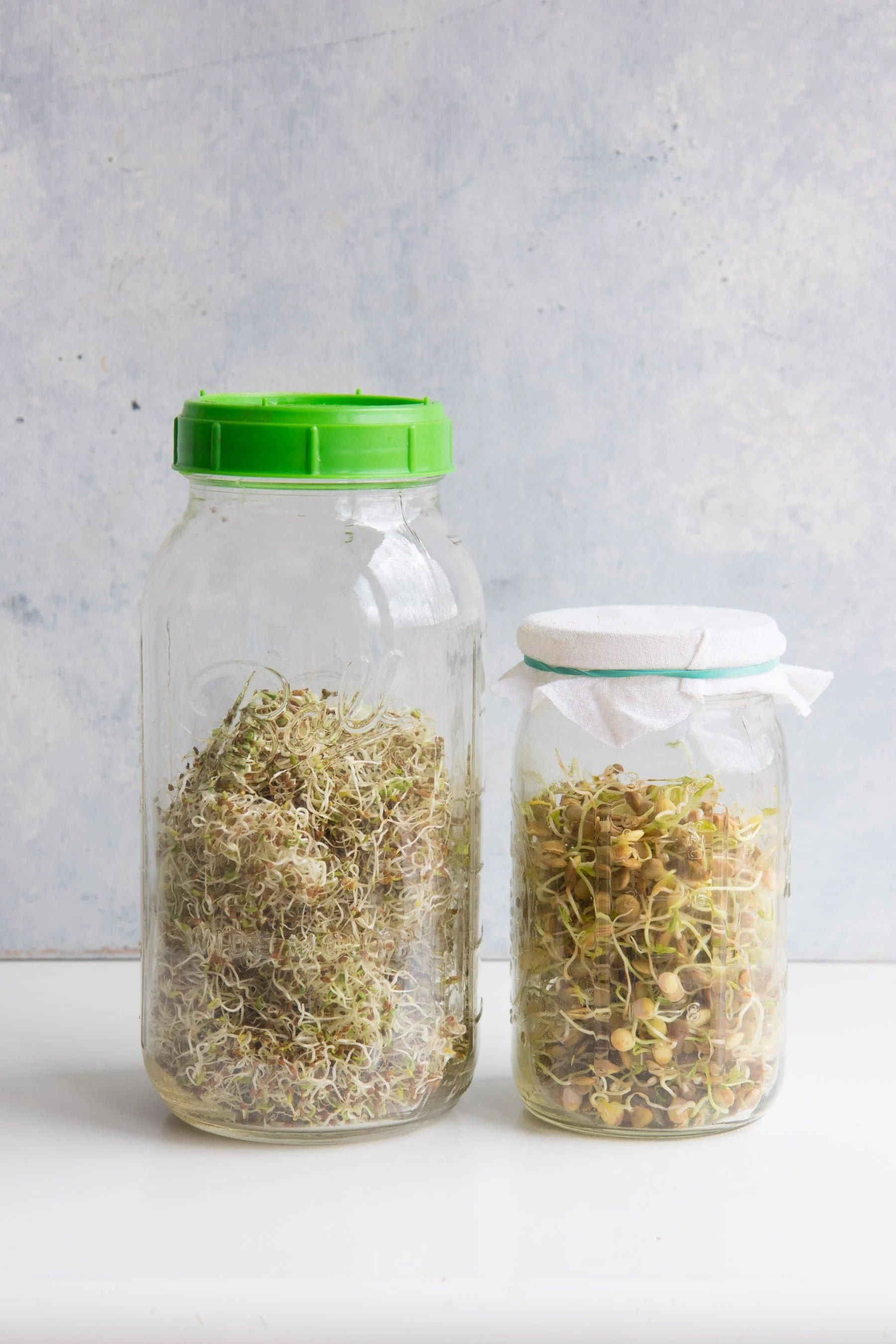Two mason jars side-by-side filled with clover and lentil sprouts