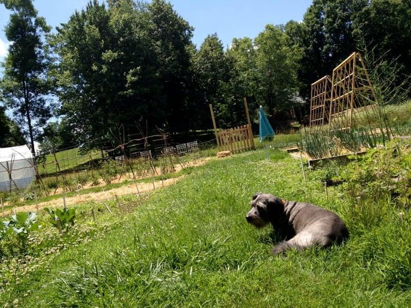 puppy garden