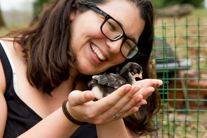 Me Baby Chicks