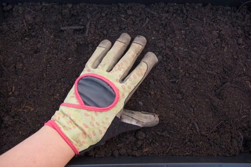 A hand pats potting soil down into a black growing flat.