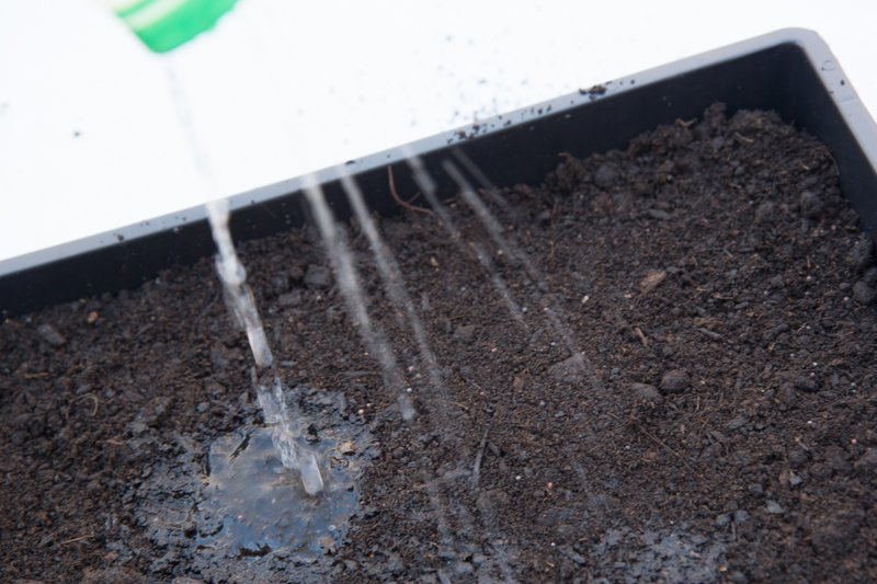 Water is being poured into the flat of potting soil.