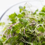 "A vertical image shoes microgreens sitting in a clear glass bowl. A text overlay reads ""How to Grow Microgreens Indoors"""