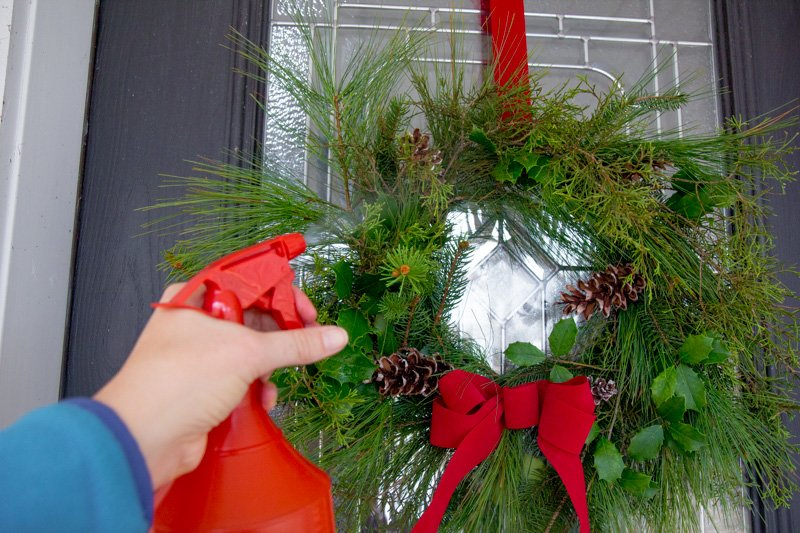 Hand spritzing a fresh greenery wreath with a spray bottle