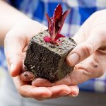 "Two hands holding a soil block with red lettuce and the text overlay ""How to Use Gardening as Mindfulness Practice"""