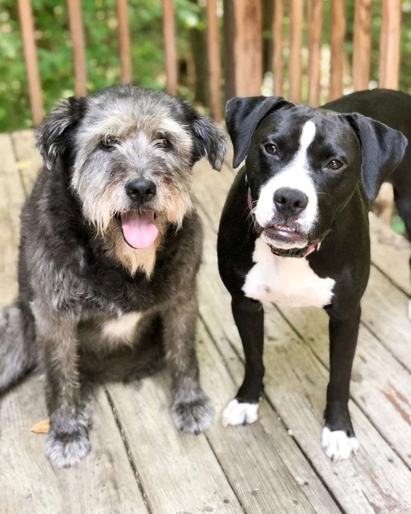 Two dogs side-by-side on a wooden porch