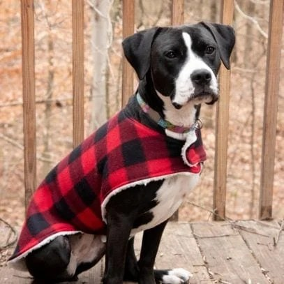 Black and white dog sitting and wearing a plaid custom dog coat outside