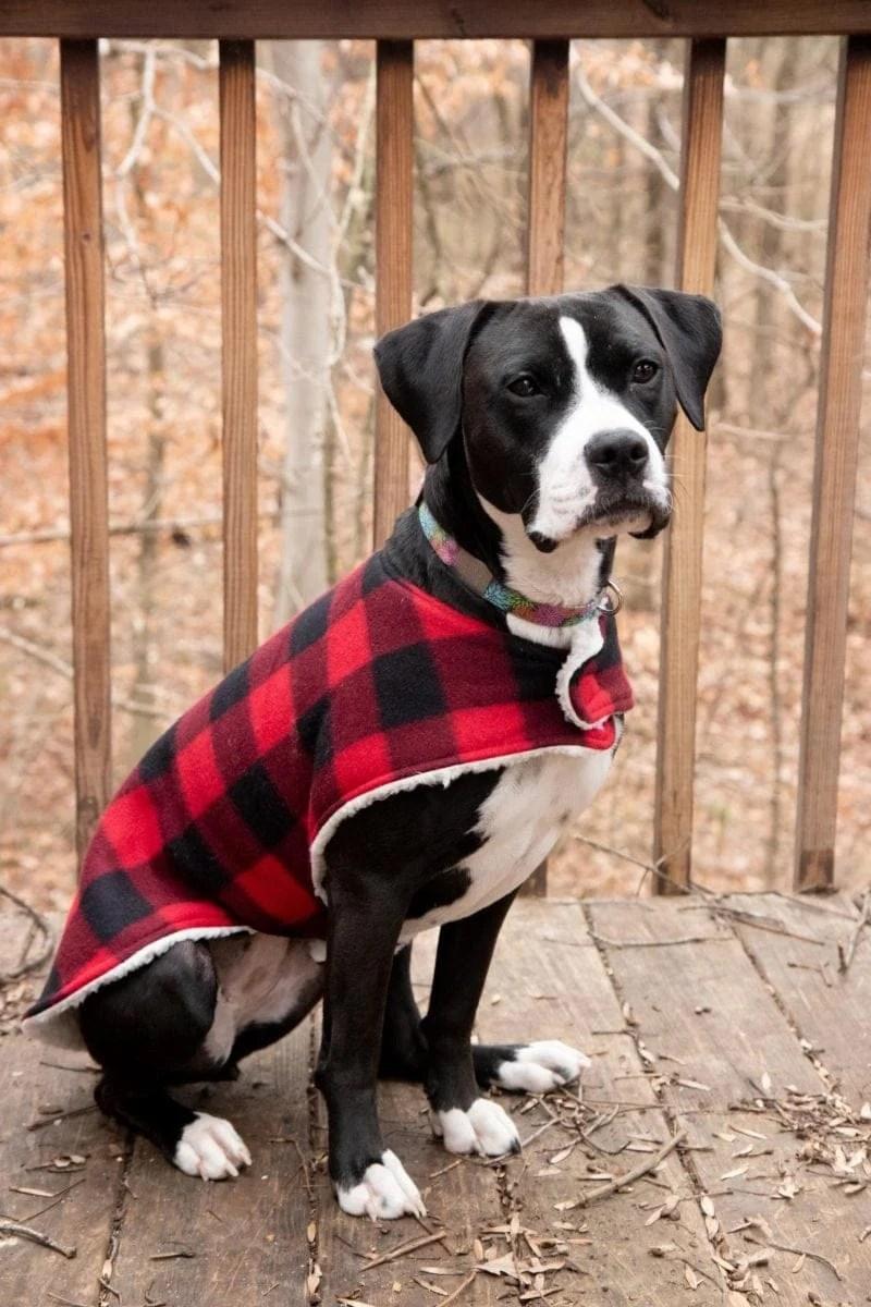 Black and white dog sitting and wearing a plaid custom dog coat outside