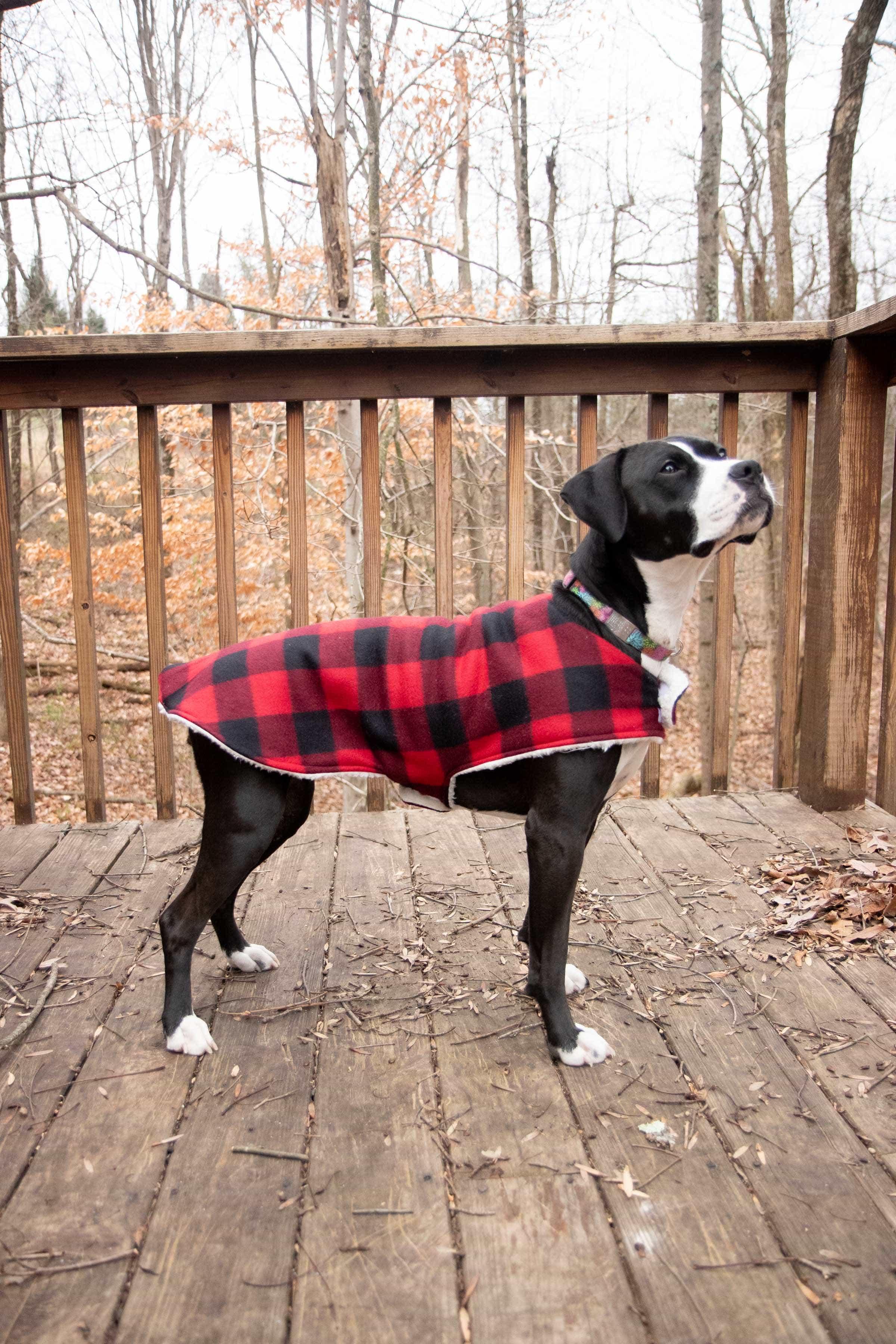 Black and white dog wearing a plaid custom dog coat outside