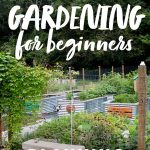 "A fenced in vegetable garden. A text overlay reads ""Organic Vegetable Gardening for Beginners. Planning Your Garden."""