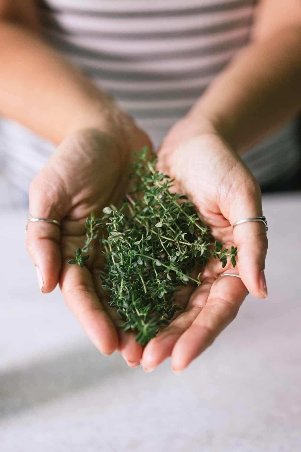 Hands holding a bunch of fresh lemon thyme.