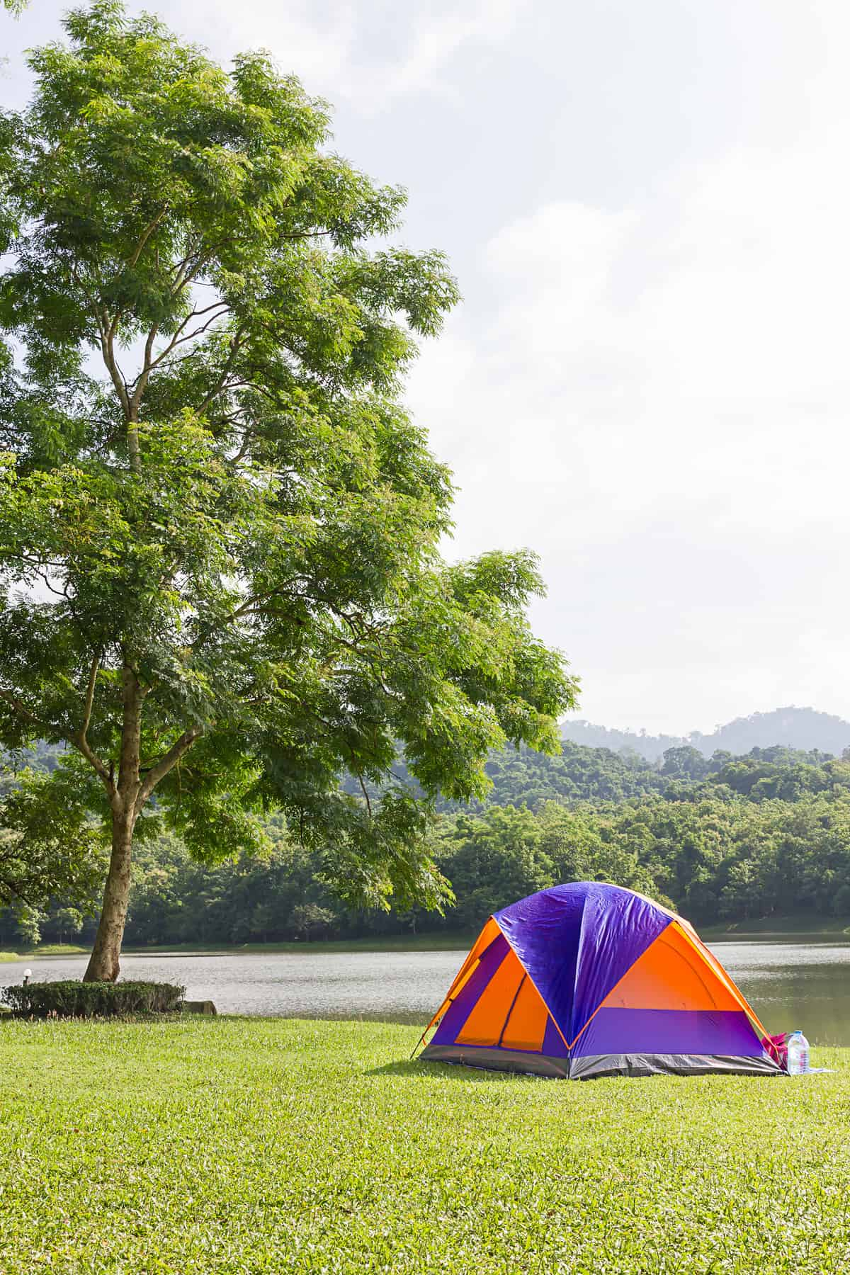 A purple and orange tent sits in a field next to a river and a big tree.