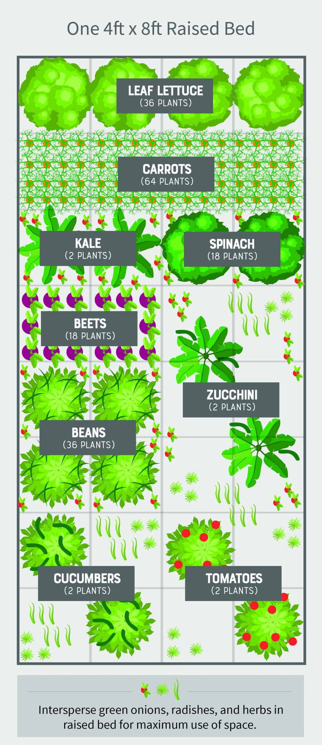 Image of: How To Build A Cheap And Easy Emergency Vegetable Garden Wholefully