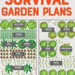 "Plot of an emergency vegetable garden plan for two 4'x8' raised beds. A text overlay reads ""Emergency Survival Garden Plans."""