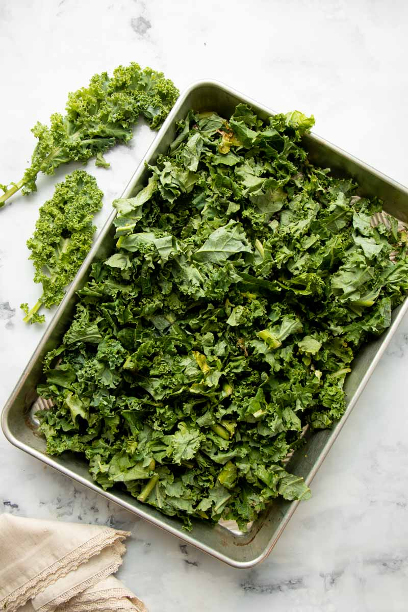 Overhead of torn kale in a single layer on a baking sheet to flash freeze before storing.