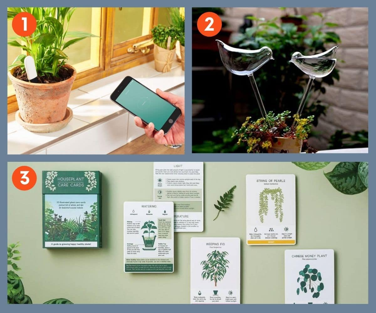 Collage of three plant care gifts including glass watering bulbs shaped like birds, and over-sized artist renderings of plant care cards.