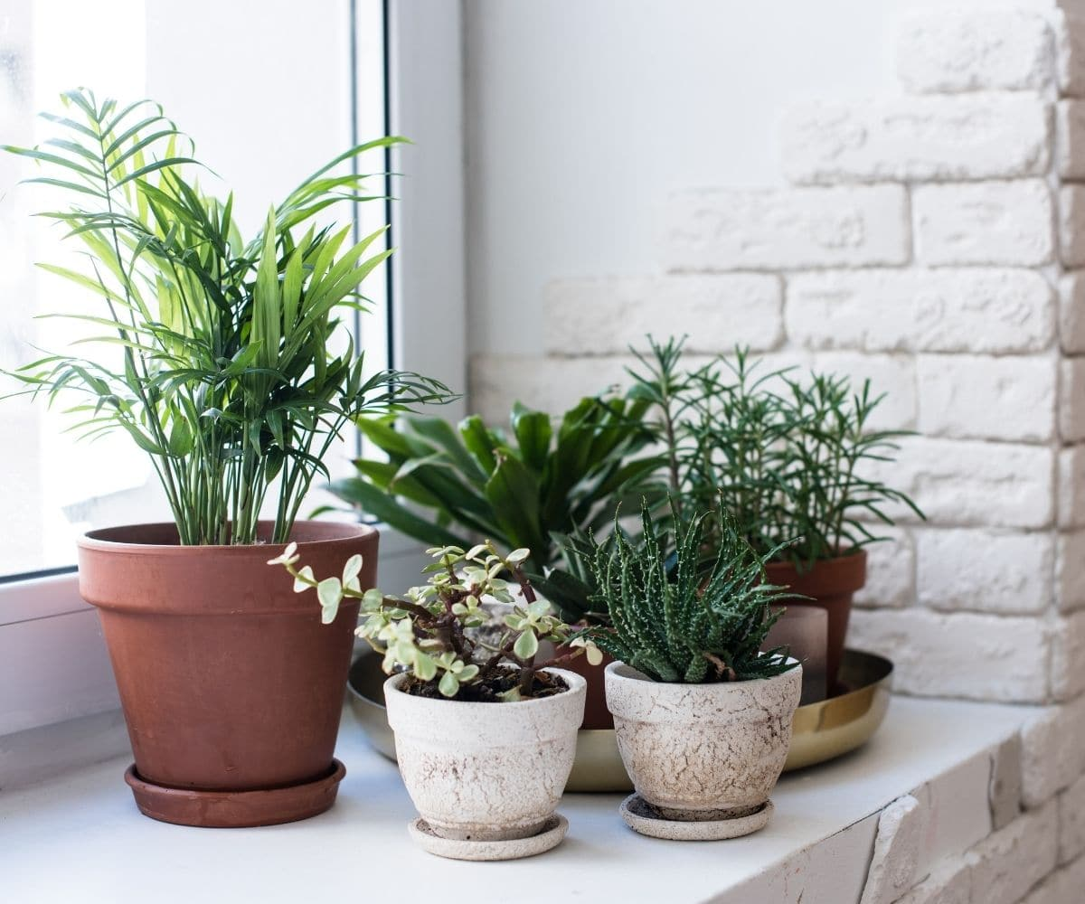 An arrangement of potted plants sits on a wide window sill.