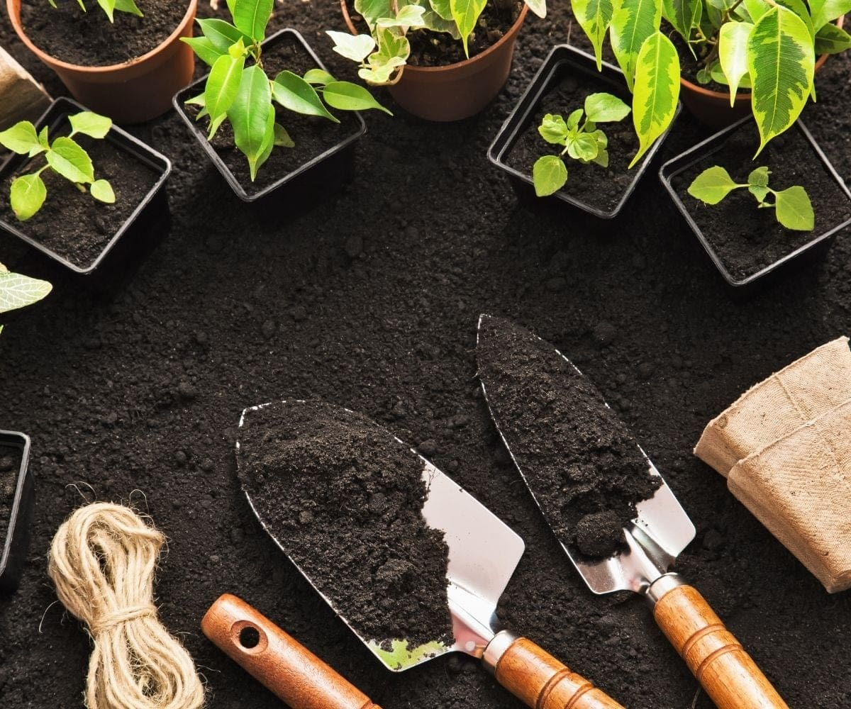 Overhead of gardening trowels in rich black soil surrounded by newly potted plants.