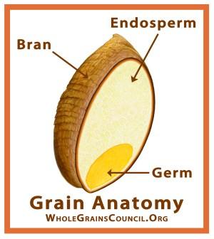 What is a Whole Grain? | The Whole Grains Council