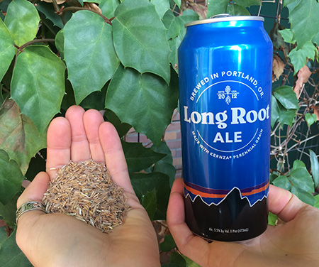Long Root Ale made with Kernza