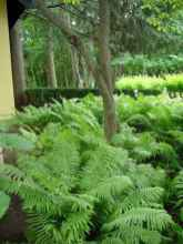 59 fresh and beautiful front yard landscaping ideas
