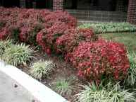 37 affordable low maintenance front yard landscaping ideas