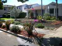 55 affordable low maintenance front yard landscaping ideas