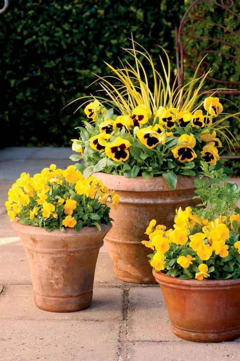 45 beautiful summer container garden flowers ideas