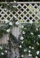 62 beautiful front yard cottage garden landscaping ideas