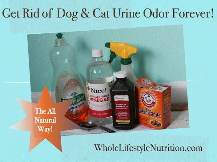 Get Rid Of Dog And Cat Urine Odor The All Natural Way Wholelifestylenutrition Com