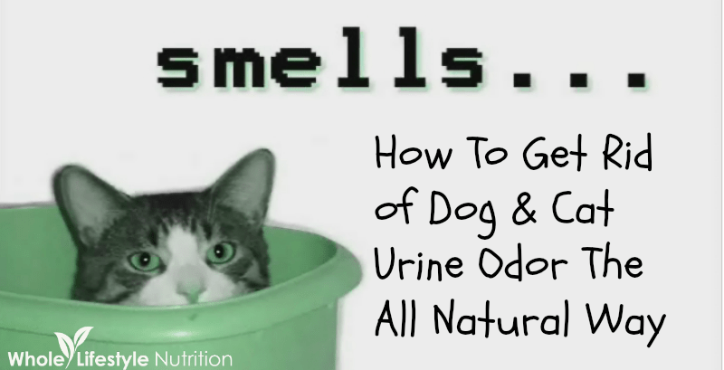 How To Get Rid Of Old Dog Urine Smell Out Carpet Www