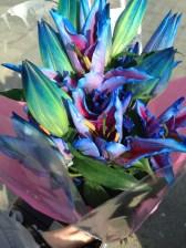 I gave my Mum blue flowers for her birthday