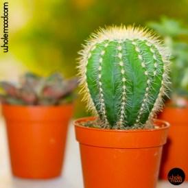 Vicious Cactus