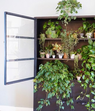A collection of Houseplants displayed in an open cupboard.