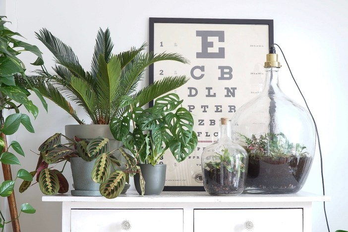 A collection of Houseplants with an antique eye-sight test.