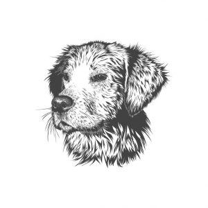 whole pooch logo with white padding