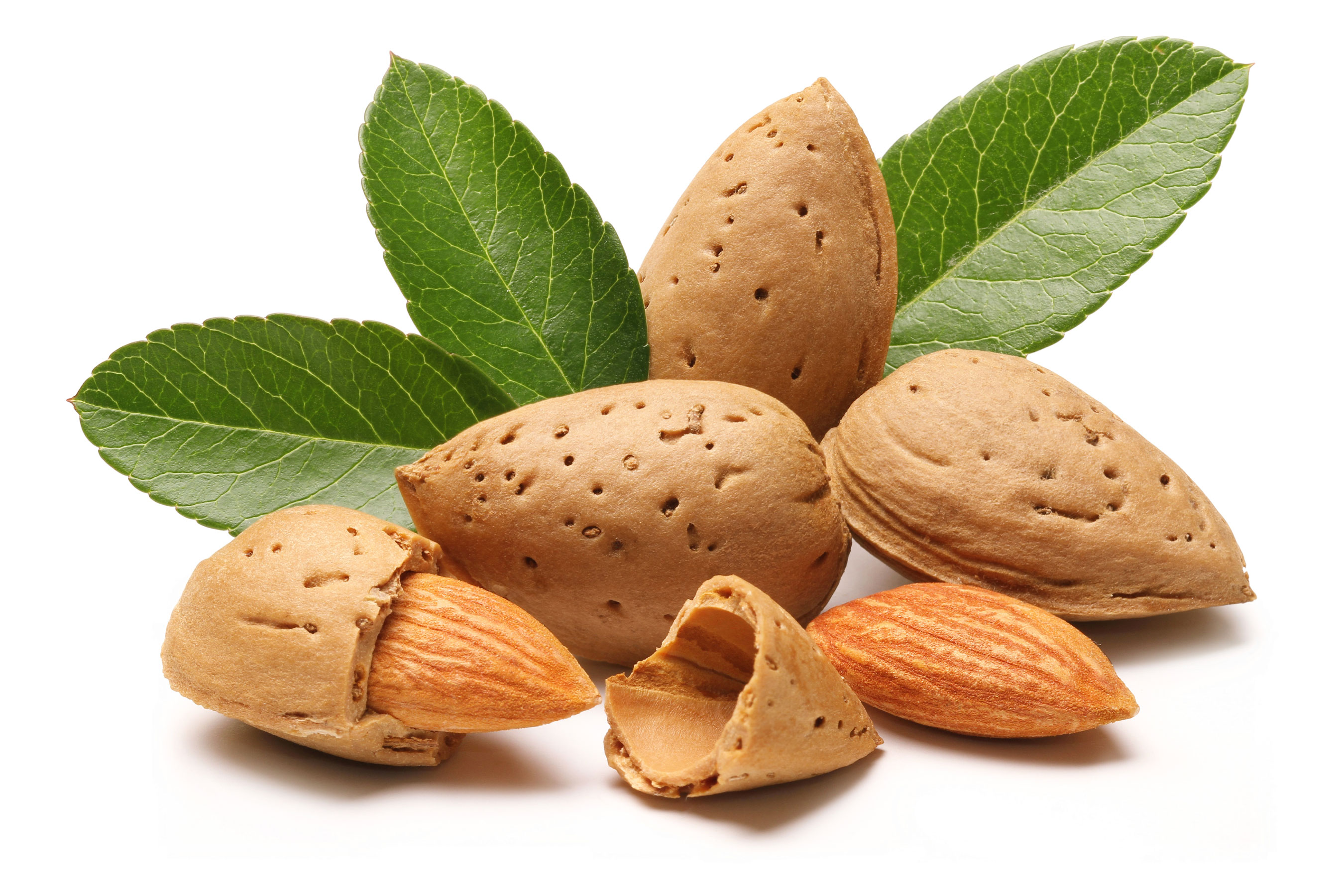 Image result for images of almonds